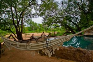 safaris in timbavati game reserve