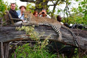 motswari luxury safari lodge timbavati game reserve limpopo