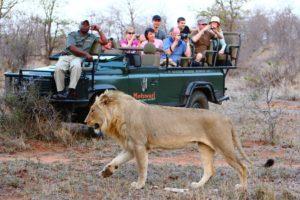 luxury big 5 safari timbavati game reserve south africa