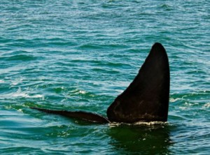 Grootbos Whale Tail