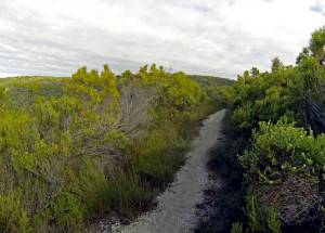 Harkerville Trail