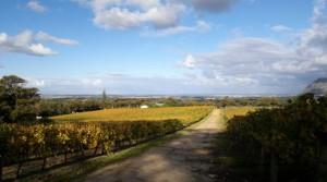 Vineyards Groot Constantia 2012 May