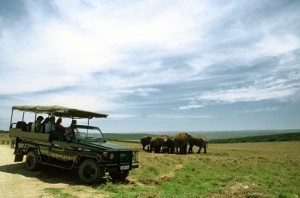 Woodall Country House & Spa offers daily drives into Addo Elephant National Park