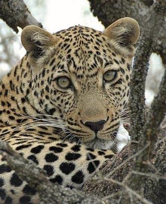 Tips for Safe Safaris
