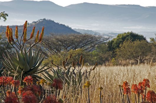 In the Warm Flame of the Aloes: Home-Brewed Hospitality at Three Trees at Spioenkop