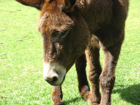 Brayve Work: The Eseltjiesrus Donkey Sanctuary in McGregor, and Where to Stay & What To Do in Nearby Robertson