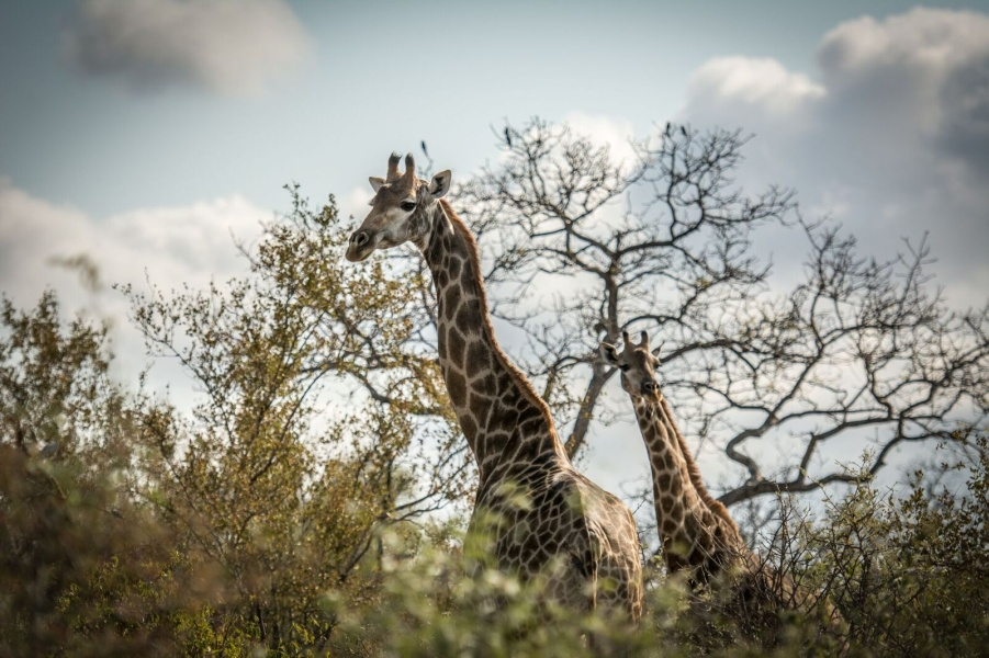 Long-Life Safari Specials in South Africa: Savings With a Good Shelf Life