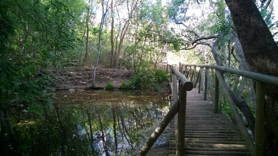 Bridge at Old Dam
