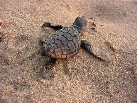 Turtle-Time Getaway at Thonga Beach Lodge, KwaZulu-Natal