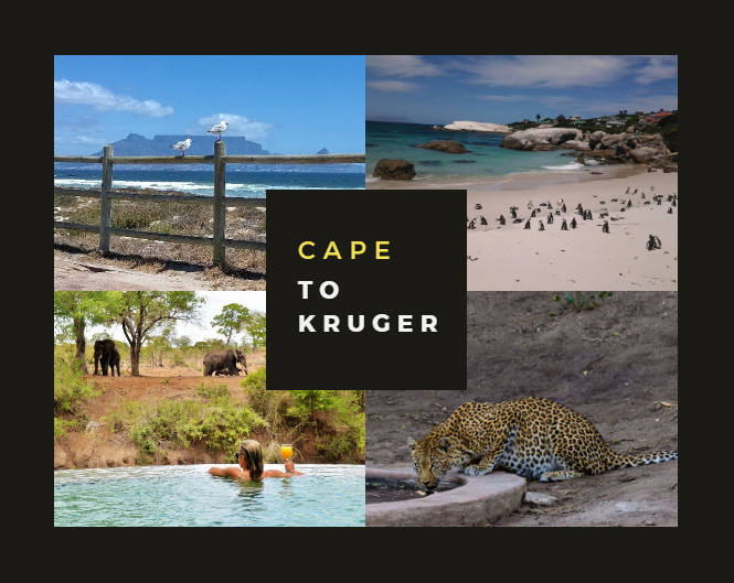 Cape Town to Kruger: Two Iconic Stops on Any South African Tour