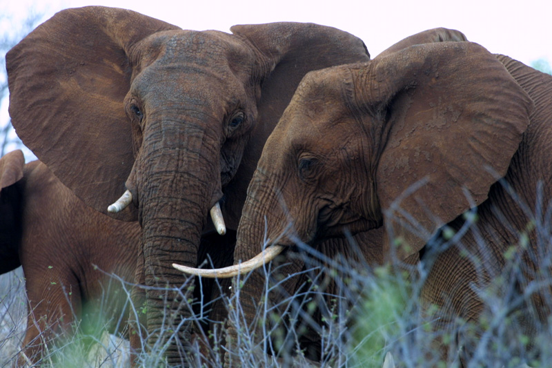 Reduced Rates, and Other Cool Things about Winter Safaris