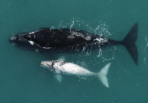 Three Winning Whale-Watching Spots a Short Hop from Cape Town