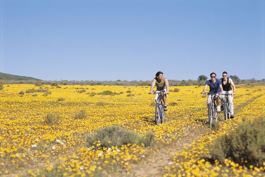 The Joys of Spring: Plan a Getaway during Flower and Whale Season