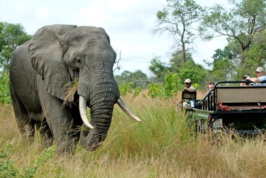 Patchwork Travel Made Perfect: Mix-and-Match Itineraries for your South African Holiday