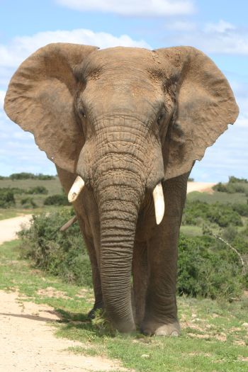 Alive with Ellies & Citrus: Addo Elephant National Park Eastern Cape