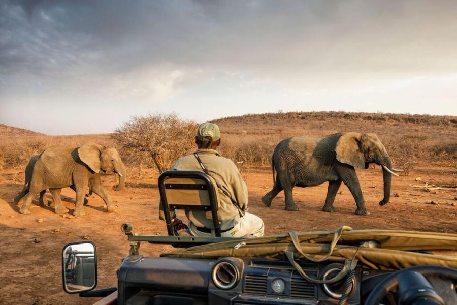malaria free safaris south africa