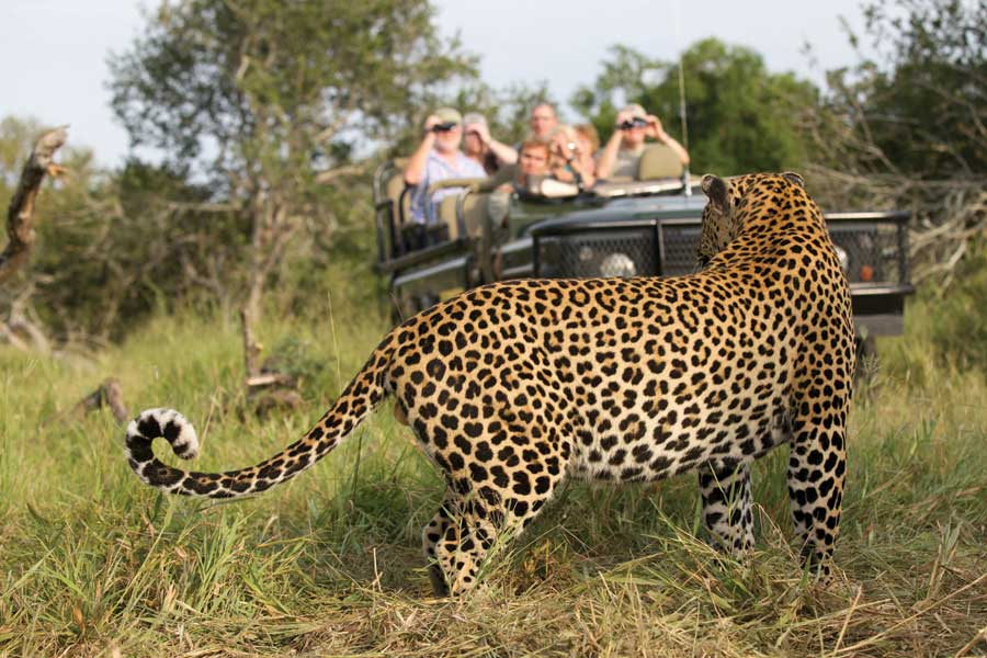 Safaris in South Africa: From the Sublime to the Ridiculously Good-Value Safari