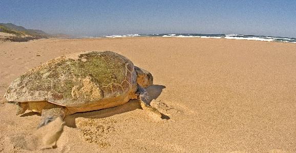 turtle viewing Thinga Beach Lodge KwaZuluNatal