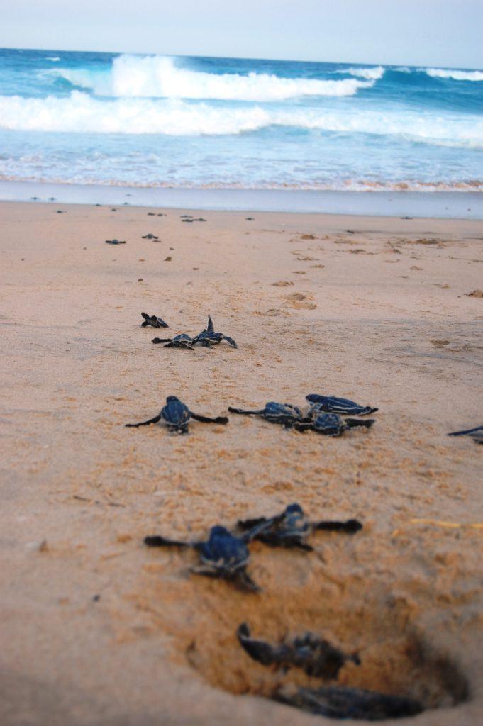 turtle viewing Thonga Beach Lodge KwaZuluNatal