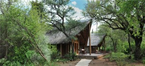 Black Rhino Game Lodge, Pilanesberg