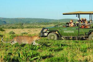 shamwari game reserve malaria free big 5 photographic safaris