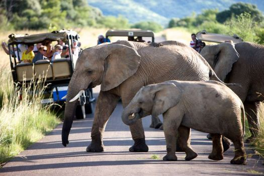 The Best of the Bush Near the Buzz of Sun City: A Pilanesberg Safari