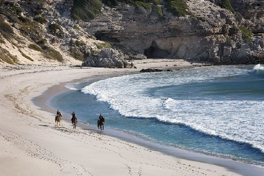 Horse riding is one of the activities available at Grootbos