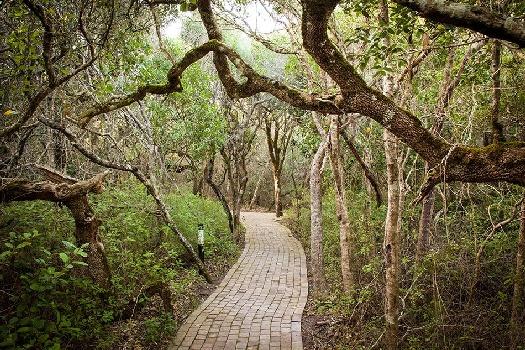 Grootbos Walkway