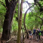 Hluhluwe River Lodge Forest Walk