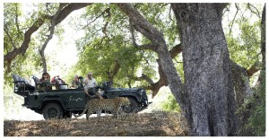 Singita Game Reserves