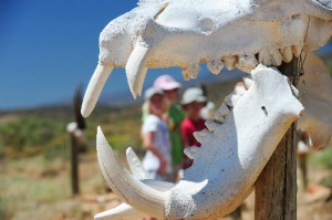 Children having a wonderful experience in the Sanbona Wildlife Reserve, Little Karoo