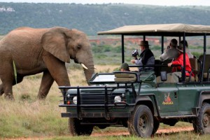 Game drive at The Safari Lodge in the Amakhala Reserve of the Eastern Cape