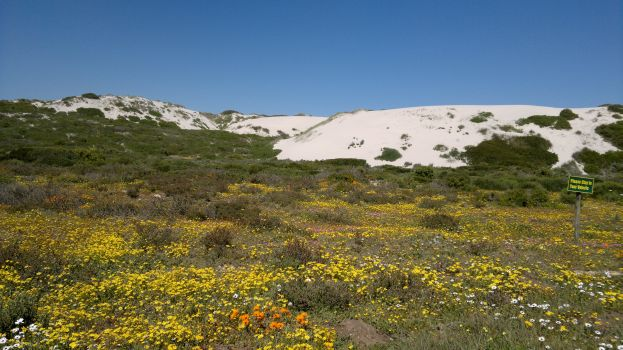 The West Coast National Park in spring