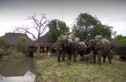 Safaris in South Africa Come in All Shapes & Sizes – Find the One That Fits You Best