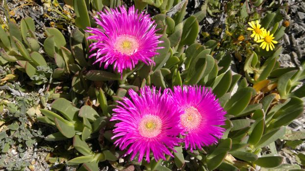 Put Some Spring in Your Step. Head for the Flowers and the West Coast National Park