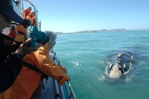 Boat-based whale watching with Grootbos