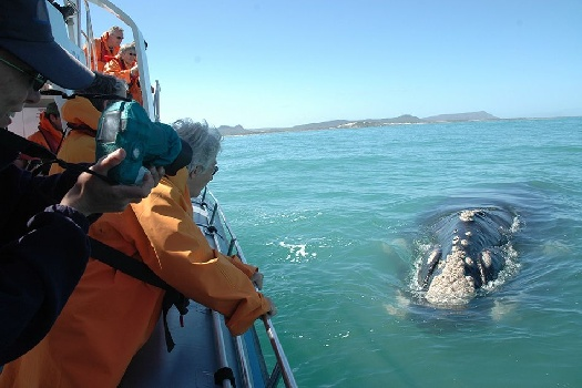Grootbos - boat-based whale watching on a marine safari