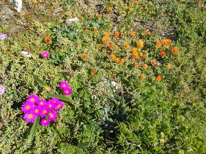 Flowers at Postberg West Coast National Park