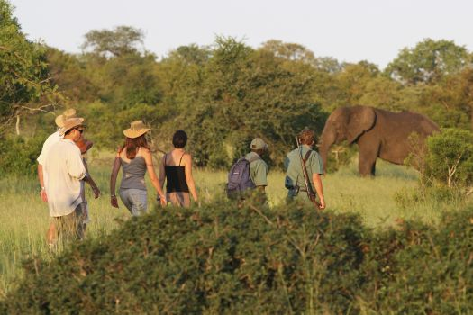 Rhino Walking Safaris - a great way to encounter the Kruger National Park