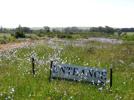 Waylands Reserve near Darling  Spring flowers West Coast