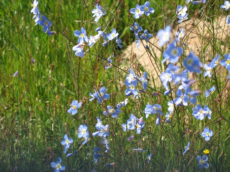 private flower reserves Waylands Reserve Darling West Coast Spring flowers
