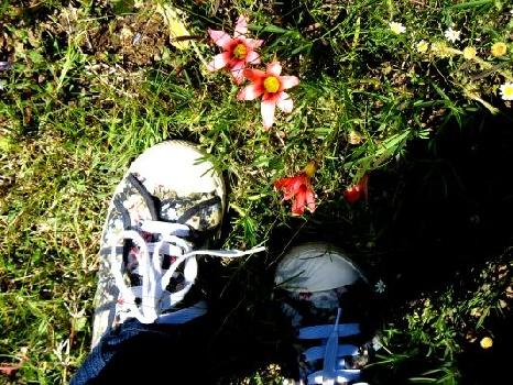 Wild veld flowers Darling West Coast Spring flowers