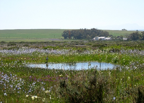 Wild spring flowers Darling Cape West Coast  Exclusive Getaways