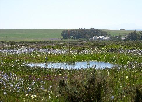 Wild spring flowers Darling Cape West Coast  Exclusive Getaways