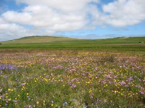 Spring flowers Darling Cape West Coast