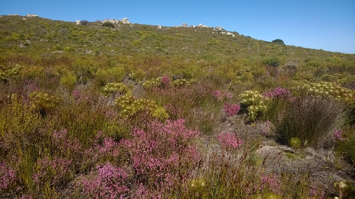 Sightseeing Cape Point cape Town South Africa Exclusive Getaways