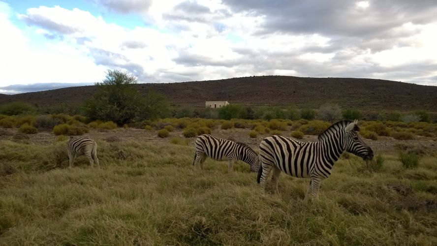 Western Cape safari at Sanbona Wildlife Reserve Dwyka Tented Lodge