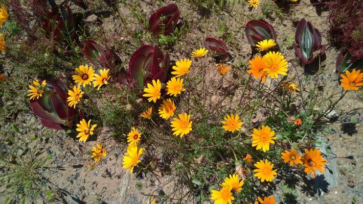 Karoo Desert Botanical Garden at Worcester Western Cape  Exclusive Getaways images