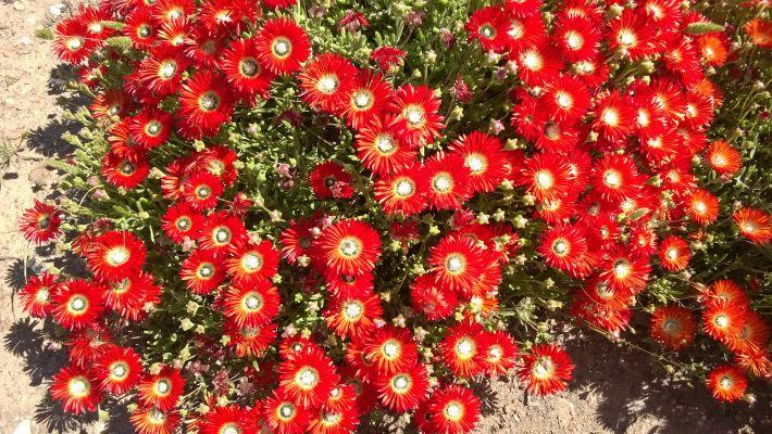 Karoo Desert National Botanical Garden at Worcester