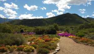 Karoo Desert National Botanical Garden at Worcester